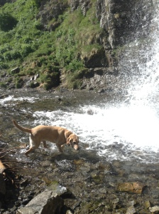 Napoleon in the waterfall