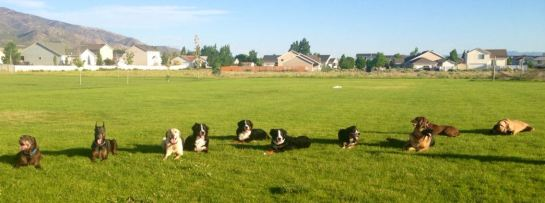 And just to show... here's the obedience class I was enrolled in.