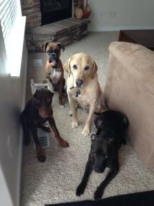 Heather Hamilton blog Project K9 Dogs