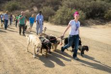 Heather Hamilton Cesar Millan Project K9 pack Walk