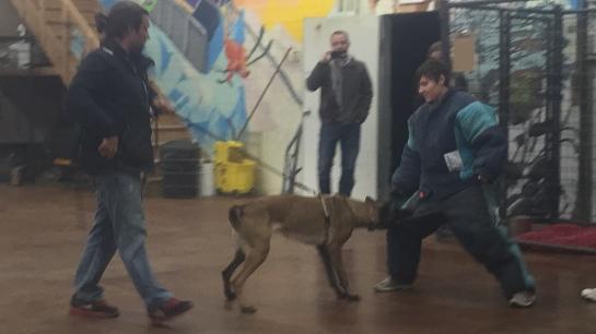 k9Lifeline_difficult_dog_workshop_decoy_heather_hamilton_projectk9