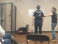 k9Lifeline_difficult_dog_workshop_heather_hamilton_projectk9