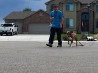 Project K9 Utah Dog Training