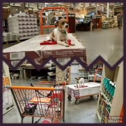 homedepotmarshall