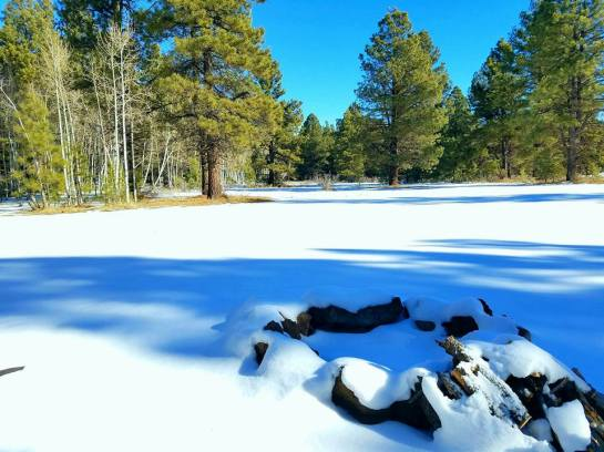 Dixie National Forest 12/2016